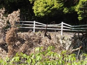 大きく湾曲したガードパイプ(松下社付近の池)