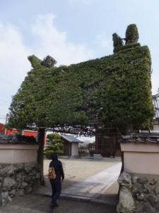 延命寺の植栽による山門(多気郡明和町)
