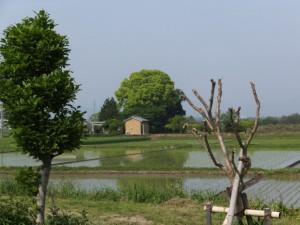 坂本遊園地の先の道標付近から望む坂本神社(多気郡明和町)