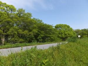 緑鮮やかな宮川の右岸堤防道路