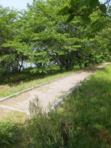 棒堤(宮川右岸)
