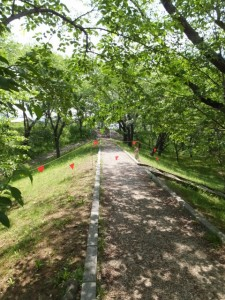 駿河堤(改修工事が開始された宮川堤)