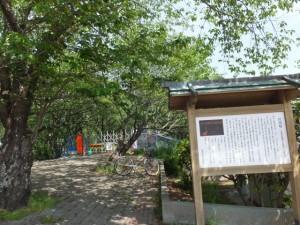 改修工事が開始された宮川堤、『さくら名所100選の地』