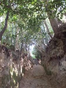 近長谷寺へ続く長谷観音道