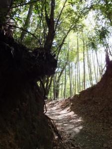 中間点から山の神への途中(長谷観音道)