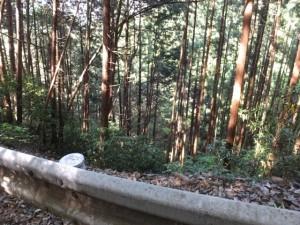 おん婆滝付近(長谷観音道)