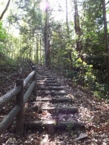 近長谷城跡への階段