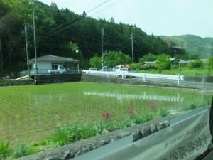 大井の水車がある大井集会所付近
