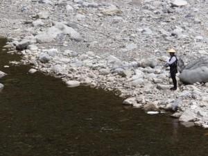 昨日(5月17日)に解禁された鮎釣り(宮川)