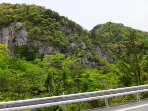 滝谷の川岸岸壁植物群落(宮川)