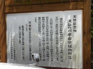 「天然記念物 滝谷の川岸岸壁植物群落」の説明板
