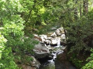唐櫃谷橋から望む上流側