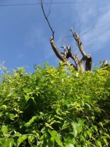 本田の渡し跡(宮川)への分岐付近〜大台町赤滝の地名板