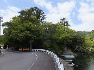飛鳥神社の社叢と賀田湾(尾鷲市曽根町)