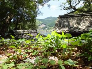 飛鳥神社から望む賀田湾(尾鷲市曽根町)