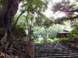 参道の石階脇に立つ大木の板状根(倭姫宮)