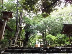 参道の石階から望む新御敷地(倭姫宮)