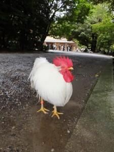 神鶏(内宮の参道にて)