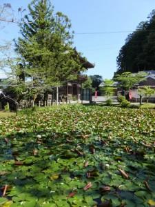 丹生神社の参道から望む丹生大師の池(多気町丹生)