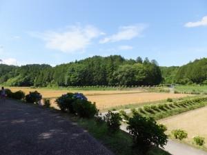 立梅用水 素掘のトンネル入口付近の風景(多気町丹生)