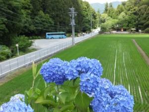 道路を越える立梅用水付近からの風景(多気町丹生)