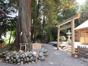 御神木 手力の大桧と御遷座に向けて御造営が進められている佐那神社(多気町仁田)
