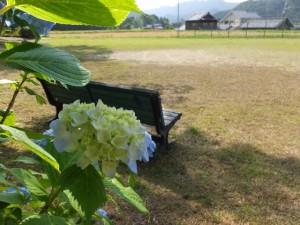 長原神社付近の広場に咲く紫陽花(度会町長原)