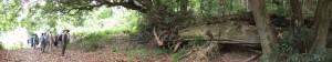 三瀬の渡し(宮川)付近の倒木