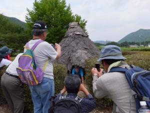 樋ノ谷遺跡(大紀町神原)