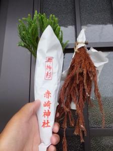 赤崎神社の御神杉、ビフォーアフター