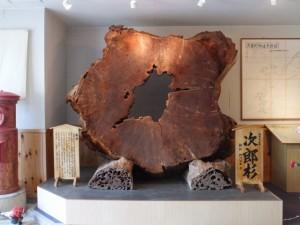 次郎杉の巨大な切り株(大紀町郷土資料館)