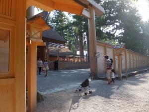 外宮 新宮の板垣南御門から望む旧宮の解体作業