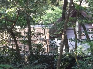 外宮 御池越しに望む土宮の新御敷地