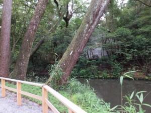 旧宮付近から御池越しに望む土宮の新御敷地(外宮)