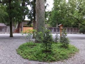 御池付近から望む旧宮(外宮)