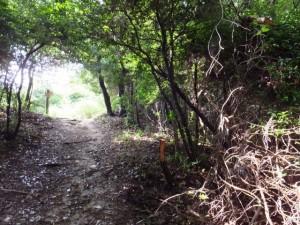 浄眼寺付近の登り口から阿坂城(白米城)跡へ