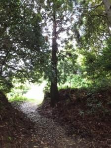 椎ノ木城跡付近(浄眼寺付近の登り口から阿坂城(白米城)跡へ)