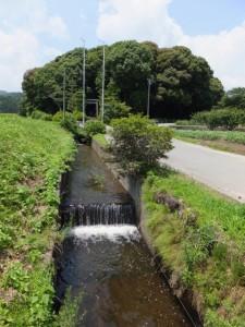 阿射加神社の社叢付近(松阪市大阿坂町)