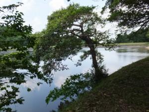 阿射加神社の近くに広がる宮池(松阪市大阿坂町)