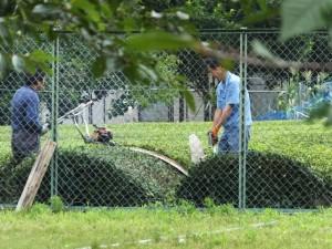 度会町消防団 第四分団 田口班付近でのお茶の木の剪定作業