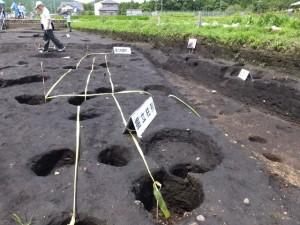野添大辻遺跡(第3次)発掘調査 現地説明会、1区の掘立柱列