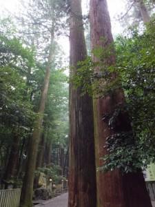 椿大神社の参道