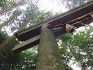 断わり乃鳥居(椿大神社)