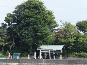 勢田川の右岸(浜郷小学校記念公園付近)から望む対岸にある牟山中臣神社