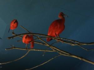 夜の鳥羽水族館