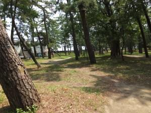 二見浦海水浴場の松林