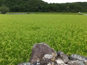 米山新田開発跡付近