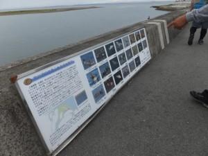 宮川河口で見られる主な野鳥の説明板(宮川河口から0.4km〜0km)