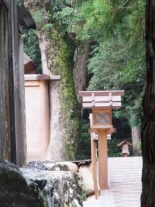 北御門参道から望む御正宮旧宮の板垣(外宮)