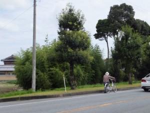 県道37号 湯田3交差点付近の竹林